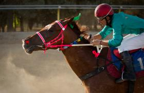 A jockey and horse at a race in Iran